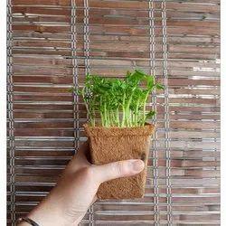 Coir Garden 6 Inch Spanish Coir Pot