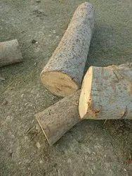 Gmelina Logs