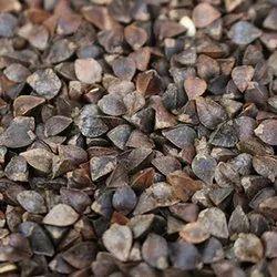 Brown Kuttu Buckwheat, 50 Kgs