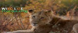Wildlife Photography Workshop Course