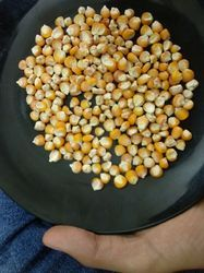Yellow Maize, Pack Size: 25 Kg