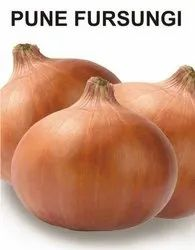 Red Pune Fursungi Onion Seeds, Packaging Type: Pp, Packaging Size: 1