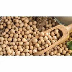 Soybean Grains