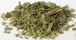 Lobelia Leaves