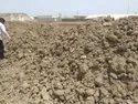Solid Unwashed Marine Gypsum