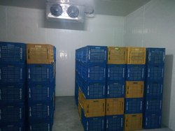 Cold Storage Rental Service
