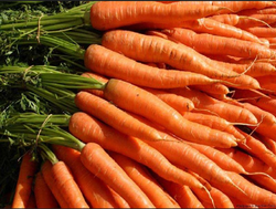Orange And Red Fresh Carrot
