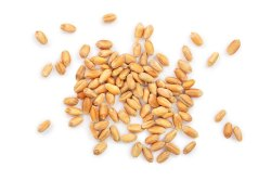 High in Protein Brown Wheat