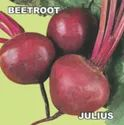 Beetroof Seed