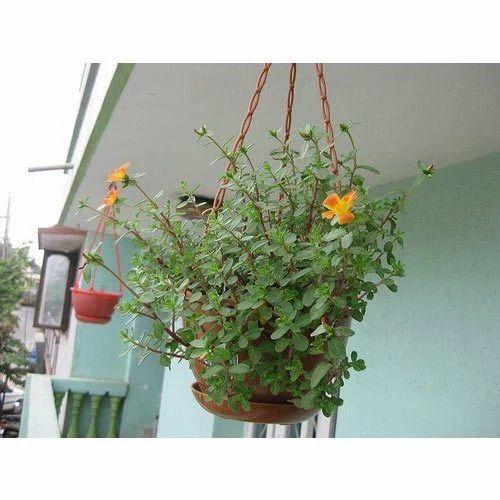 Designer Hanging Pot