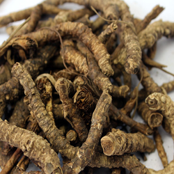 Kutki Root Extract