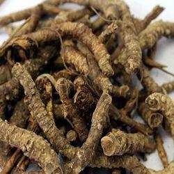 Kutki Root Extract