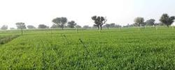 Agriculture Land for sell near Delhi Road Jaipur