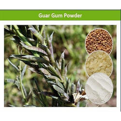 Finely Graded Guar Gum Powder