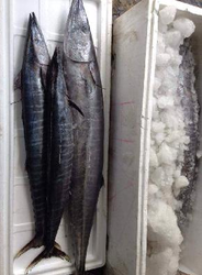 Fresh Chilled Fish 02