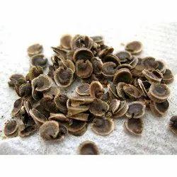 Hollyhock Seed