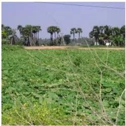 Sale And Purchase Agricultural Land
