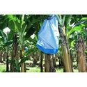 Banana Bunch Crop Cover