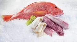 Parrot Fillets Fish