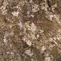 Sand Brown Granite