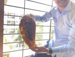 Honey Bees Treatment