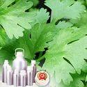 Corriander Oleoresin (Green) 1.5 % VOC