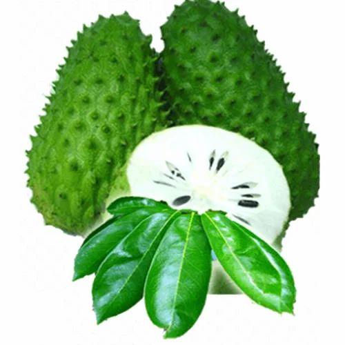 Cancer Killer Fruit Graviola Soursop