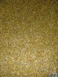 Mushroom Spawn Agriculture Seed