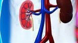 Nephrology Services