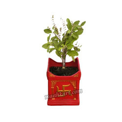 Holy Basil Divine Tulsi Planter With Attractive Design
