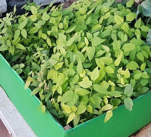 Gardening Bed Grow Bags