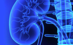 Urology Treatment Services