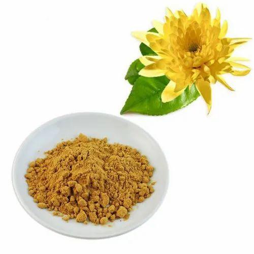 Chrysanthemun P.E.