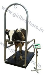 Cow Weighing Machine