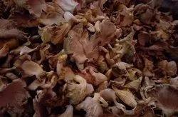 Dry Oyster Mushrooms, Packaging: Plastic Bag or Polythene