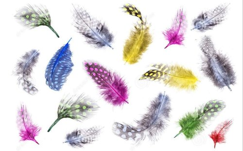 Birds Feather