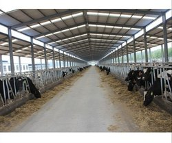 Dairy Farm Steel Shed