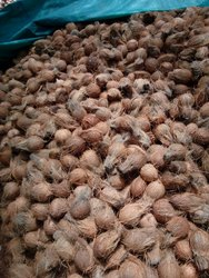 A Grade Pollachi Semi Husked Coconut, Packaging Size: 25 - 50 Kg, Coconut Size: Medium