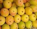 Fresh Healthy Kesar Mango