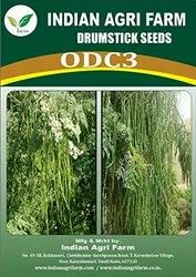 Drumstick Seeds (ODC3)