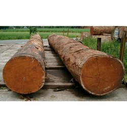 Neem Wood Log
