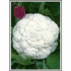 DS-60 Hybrid Cauliflower Seeds