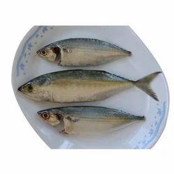 Ayala - Mackerel Fish, Packaging Type: Plastic Bag