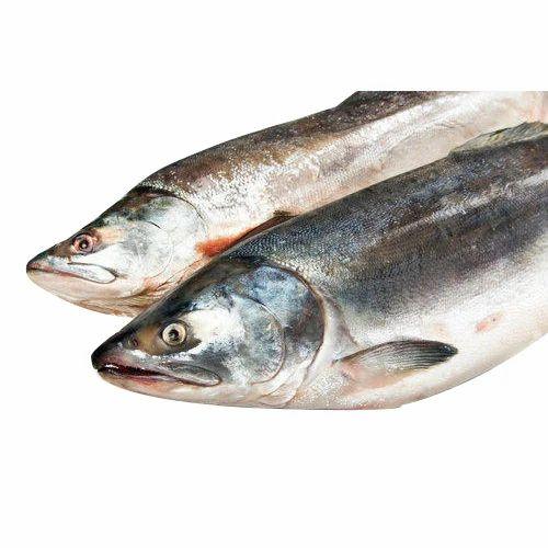 Salmon Fish, for Restaurant, Packaging Type: Plastic Bag, Rs 1500 /kilogram  | ID: 14580474791