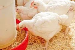 Poultry Feed Supplement  - Amino Acid