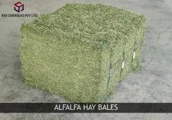 RSA OVERSEAS Alfalfa Hay, Packaging Type: PP Bags, 50 Kg Bales