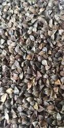 50 Kg Buckwheat Seed