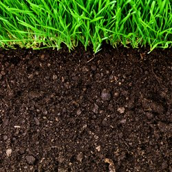 Micronutrients In Soil