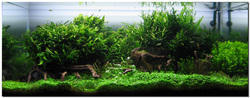 Planted Nature Aquarium