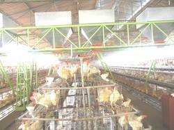 Automatic Poultry Feed Trolley